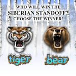 Tigre_vs_Urso