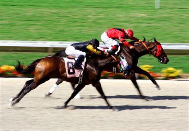 corrida-de-cavalo-aposta-1