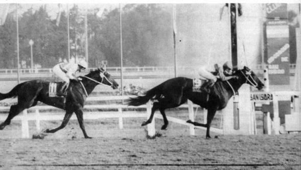 corrida-de-cavalo-aposta-2